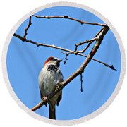 Sparrow On The Branch Round Beach Towel