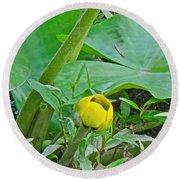 Spatterdock Wild Yellow Water Lily - Nuphar Lutea Round Beach Towel