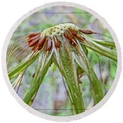 Spent Dandilion Round Beach Towel