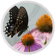 Spicebush Butterfly On Echinacea Round Beach Towel