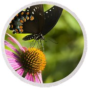 Spicebush Swallowtail Butterfly And Coneflower Round Beach Towel