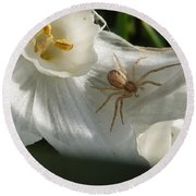 Spider In Narcissus Round Beach Towel