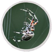 Spider - The Spinner Round Beach Towel