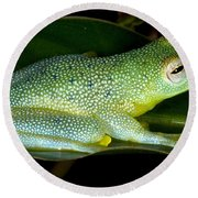 Spiny Glass Frog Round Beach Towel