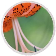 Spotted Tiger Round Beach Towel