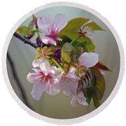 Spring Blossoms Round Beach Towel