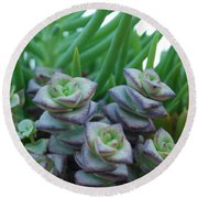 Squarely Purple Succulent Crassula Baby Necklace Round Beach Towel