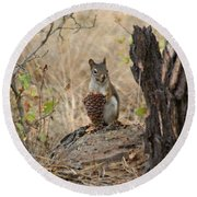 Squirrel And Cone Round Beach Towel