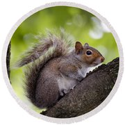 Squirrel Before Green Leaves Round Beach Towel