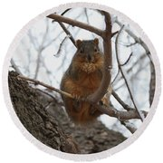 Squirrel Eating In The Frost Round Beach Towel