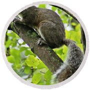 Squirrel IIi Round Beach Towel