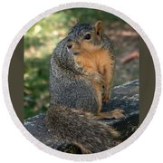 Squirrel Looking For A Hand Out Round Beach Towel