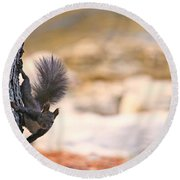 Squirrel Sitting On The Tree  Round Beach Towel