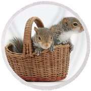 Squirrels In A Basket Round Beach Towel by Mark Taylor
