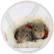 Squirrels In Santa Hat Round Beach Towel