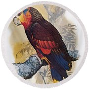 St Vincent Amazon Parrot Round Beach Towel