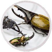 Stag Beetles Round Beach Towel