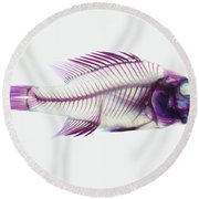 Stained Rockbass Fish Round Beach Towel
