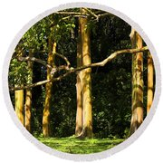 Stand Of Rainbow Eucalyptus Trees Round Beach Towel