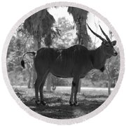Standing Tall In Black And White Round Beach Towel