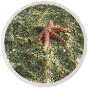 Starfish In Shallow Water Round Beach Towel
