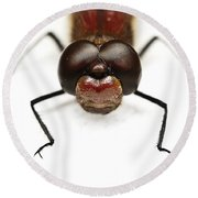 Staring At Red Dragonfly Round Beach Towel