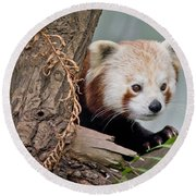 Stealthy Red Panda Round Beach Towel