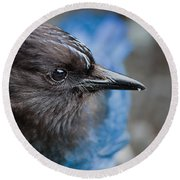 Stellars Jay Up Close And Personal Round Beach Towel