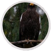 Steller's Sea Eagle Round Beach Towel