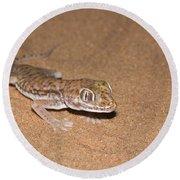 Stenodactylus Petrii Or Dune Gecko Round Beach Towel