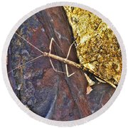 Stick Insect Round Beach Towel