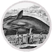 Stranded Whale, 1577 Round Beach Towel