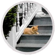 Stratford Cat Nap Round Beach Towel