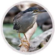 Striated Heron Round Beach Towel