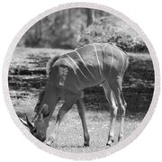 Striped Deer In Black And White Round Beach Towel