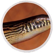 Striped Lateral Fold Lizard Round Beach Towel