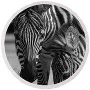 Stripes - Zebra Round Beach Towel
