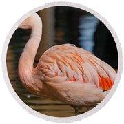 Strolling Flamingo Round Beach Towel