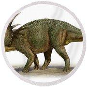 Styracosaurus Albertensis Round Beach Towel