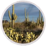 Suguaros At Sunset Round Beach Towel