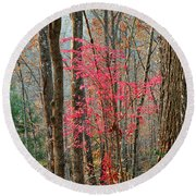 Sumac In Morning Light At Cumberland Falls State Park Round Beach Towel