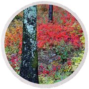 Sumac Slope And Lichen Covered Tree Round Beach Towel