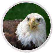 Summer Bald Eagle  Round Beach Towel