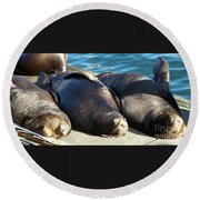 Sunbathing Sea Lions Round Beach Towel