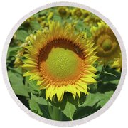 Sunflower And Honeybee July Two K O Nine Round Beach Towel