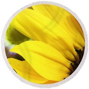 Sunflower Closeup In Landscape Round Beach Towel