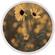 Sunflower In The Wild Round Beach Towel