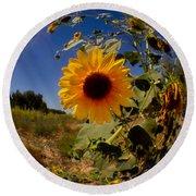 Sunflower Through A Glass Eye Round Beach Towel