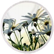 Sunlight Behind The Daisies Round Beach Towel