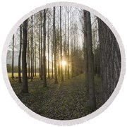 Sunlight In The Forest Round Beach Towel
